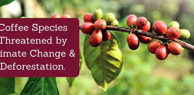 Coffee Climate Change Deforestation